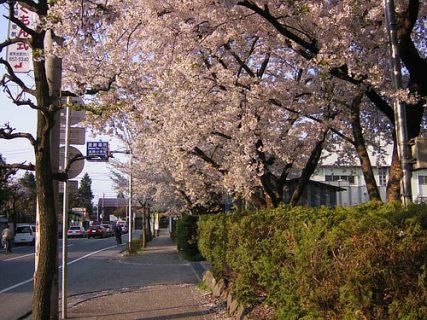 春とともに